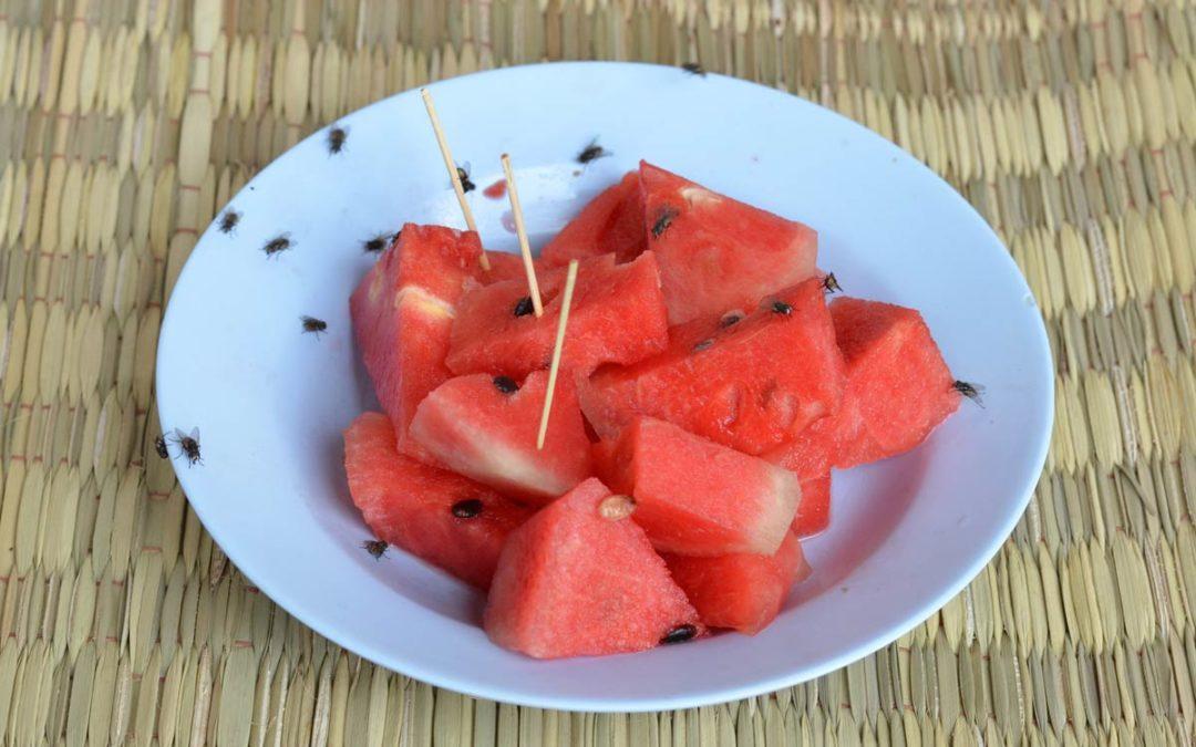 Obstfliegenfalle kaufen oder selber bauen